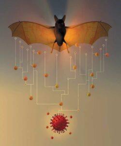 هل كان اصل فيروس كورونا تسرب من معامل ووهان في الصين أم الخفاش؟