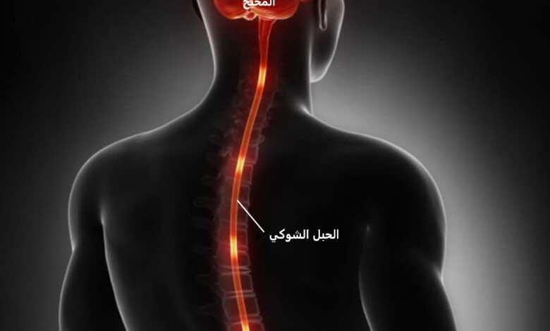 المخ والحبل الشوكي (الجهاز العصبي المركزي)