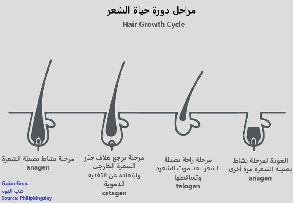مراحل دورة حياة الشعر