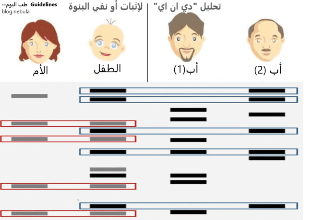 """تظهر نتائج التحليل في صورة خطوط توضح """"مواقع STR""""، وبمقارنة مدي تطابق أو اختلاف هذه الموقع بين الشخصين المطلوب إثبات النسب يمكنها يتم إثبات أو نفي النسب."""