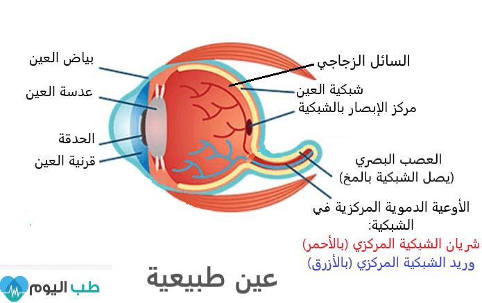 تكوين العين الطبيعية