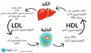 3 أنواع من الكوليستيرول في الدم، فما الفارق بينهم؟ وما مخاطر ارتفاع الكوليستيرول السيء؟