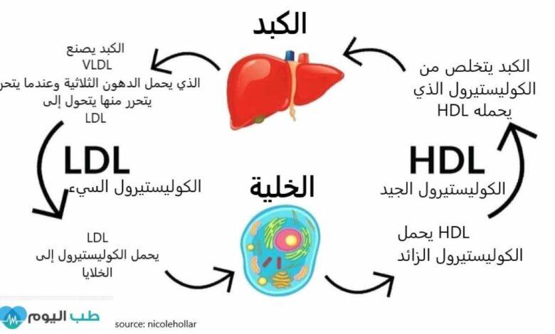 الكوليستيرول السيء LDL والكوليستيرول الجيد HDL