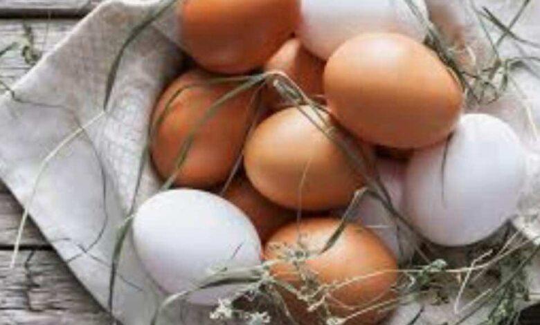 بنك المعرفة (9) | ما الفرق بين البيض الأبيض والأحمر بالقيمة الغذائية؟وما الحد الآمن لتناول البيض؟