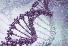 بنك المعرفة (29) | هل يمكن علاج الأمراض الوراثية؟