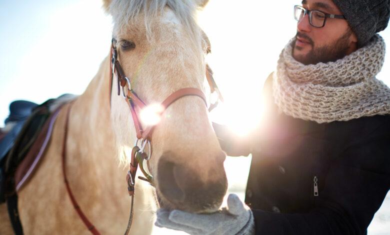 ما هو العلاج بالخيول؟ وكيف يمكن أن يساعدك حصان على تخطي أزمة نفسية؟ - شيزلونج