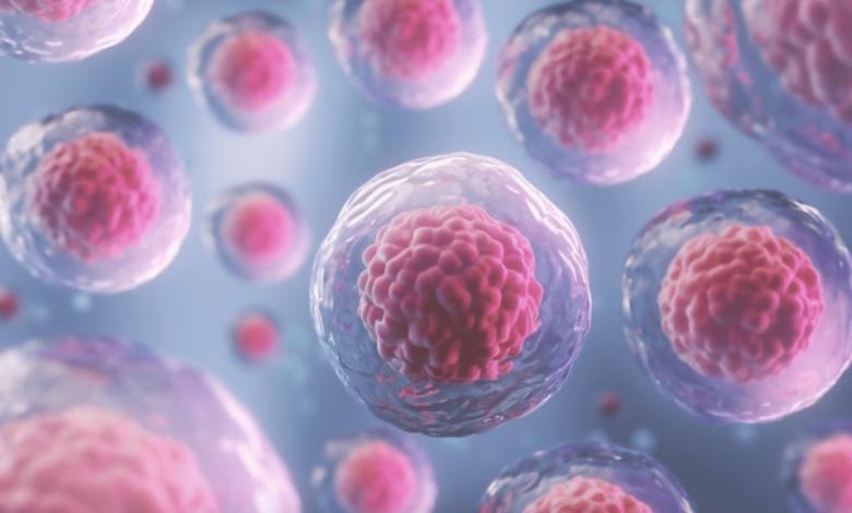 كيف تتم زراعة الخلايا الجذعية و زراعة النخاع العظمي؟ 5 خطوات - شرح مبسط