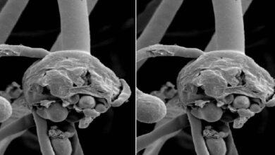 الفطر الاسود | 4 نصائحتقلل التعرض لميكروب الفطر الاسود - ما هو علاج العفن الاسود؟ - كوفيد-19