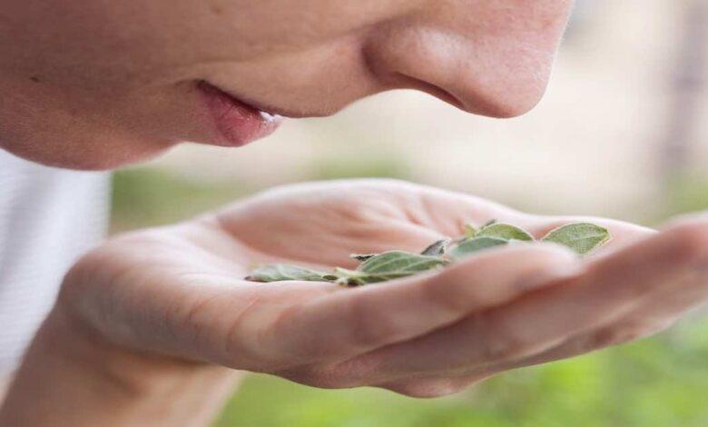 اعراض كورونا يوم بيوم   الخبراء يوصون ب تدريبات الشم في حالة استمرار فقدان حاسة الشم بعد التعافي؟