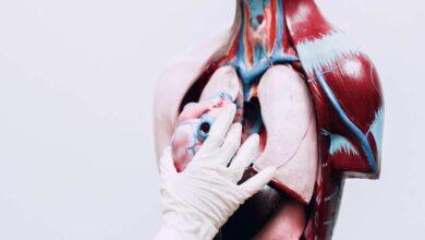سم العناكب القاتلة قد يساعد على انقاذ خلايا القلب المصاب بالذبحة