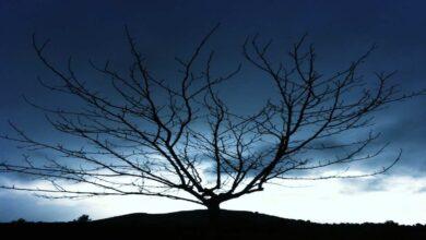 الاحلام المزعجة والكوابيس | 3 أسباب تفسر تعرضك لها وكيف توقفها؟