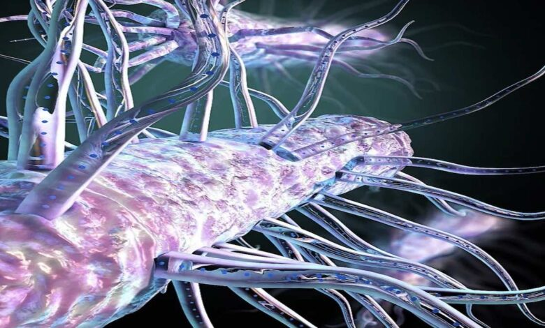 دراسة عن بكتيريا تتنفس الكهرباء تبشر بابتكار تقنيات متطورة (بالفيديو)