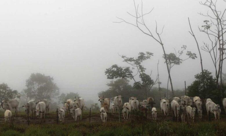 البرازيل تكتشف حالتين من جنون البقر وتوقف تصدير اللحوم للصين